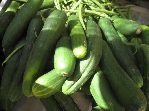 This photo shows Italian cucumbers brought to market in Sansepolcro, Italy. They are a key ingredient in gazpacho.