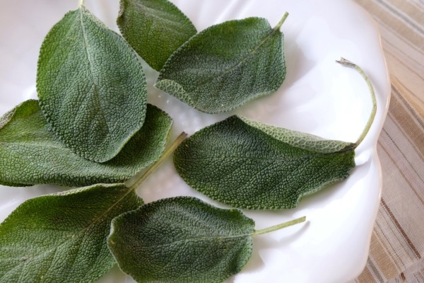 Fried sage leaves start with beautiful, velvety green sage picked fresh from your garden many months out of the year.